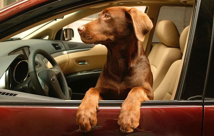 ¿Cuál es la forma más segura de transportar a su mascota?